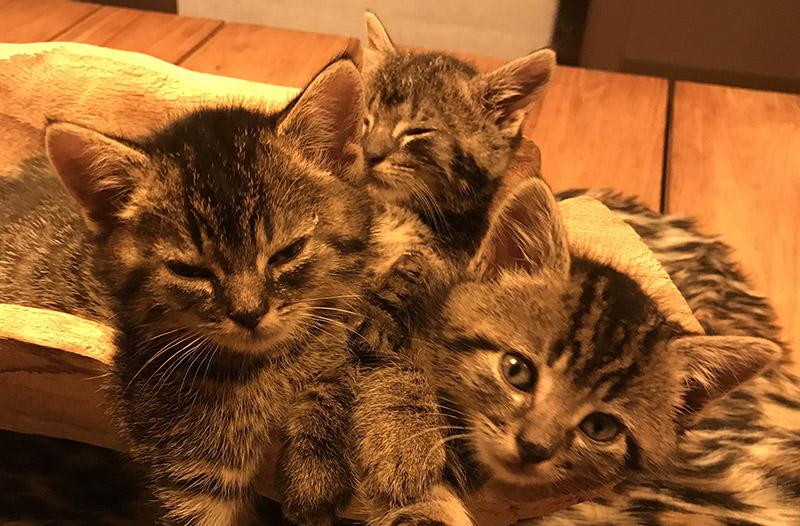 kitten adopteren